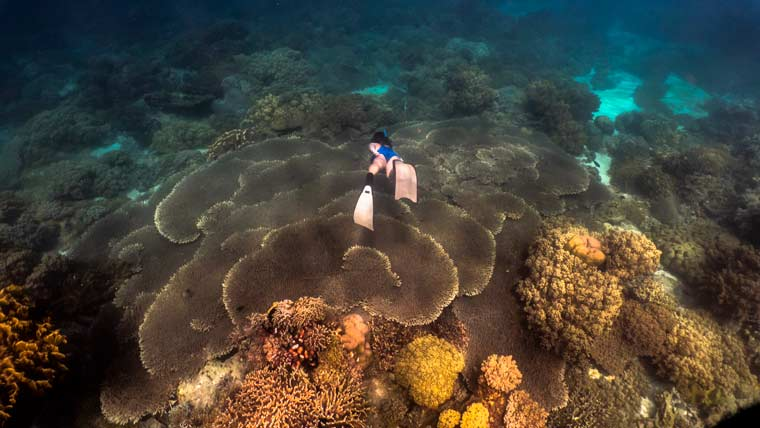 Freediver swimming through healthy corals