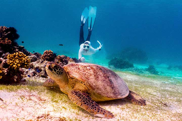 Snorkelling with a very big sea turtle